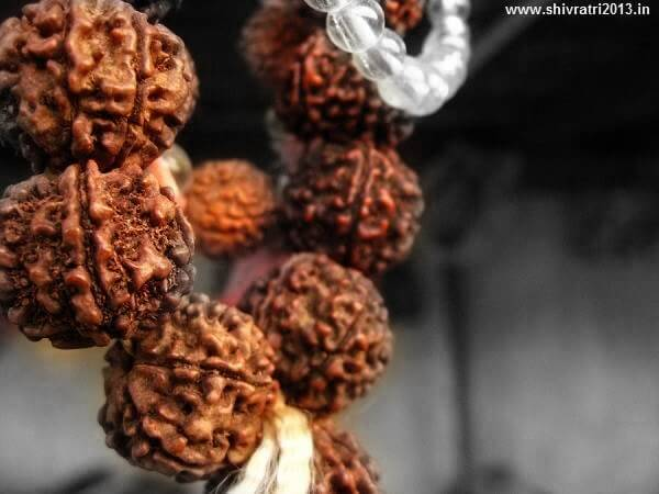 Rudraksha types | The Hindu FAQs